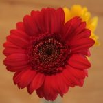 Strauß gelb rot